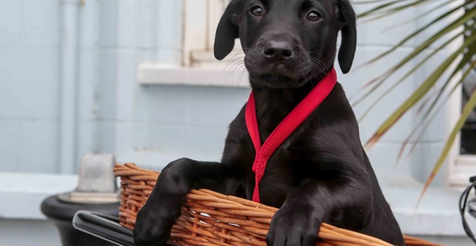The Brudenell Hotel, Aldeburgh, puppy in bike basket