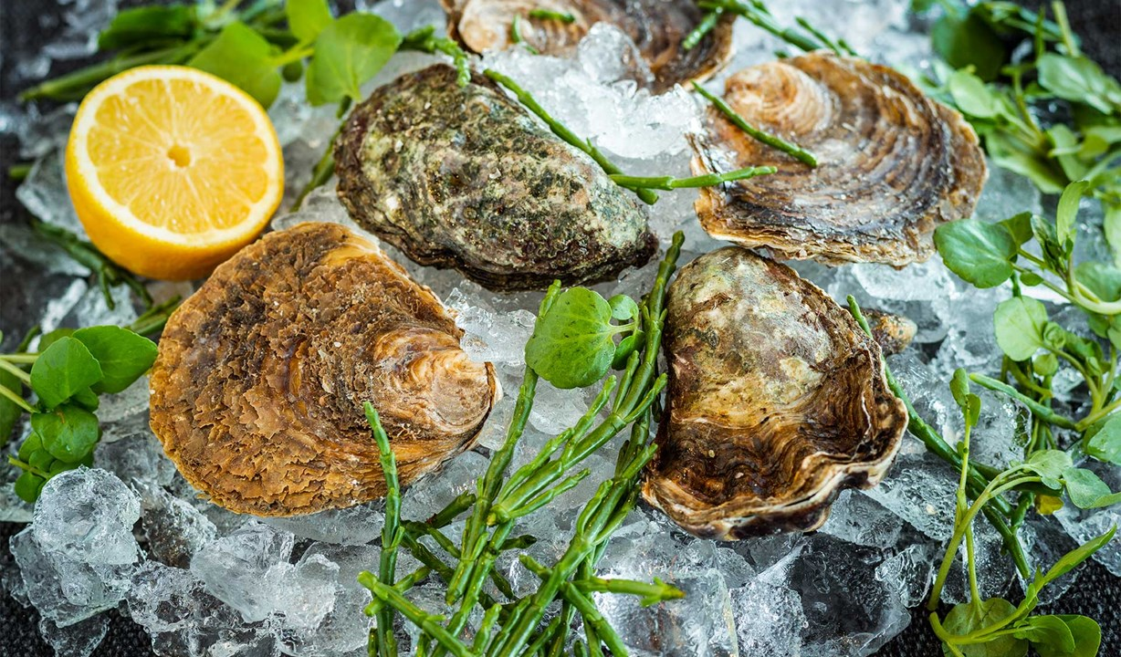 The Brudenell Hotel, Seafood & Grill, Aldeburgh, fresh oysters
